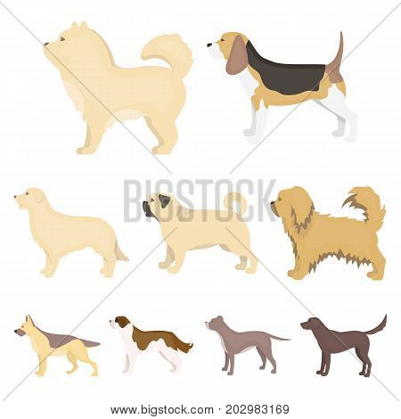 Dog breeds set icons in cartoon style. Big collection of dog breeds vector symbol stock