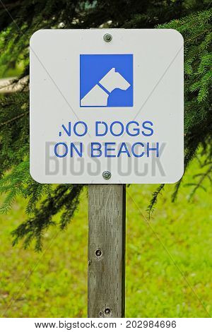 A White No Dogs Allowed On Beach Sign