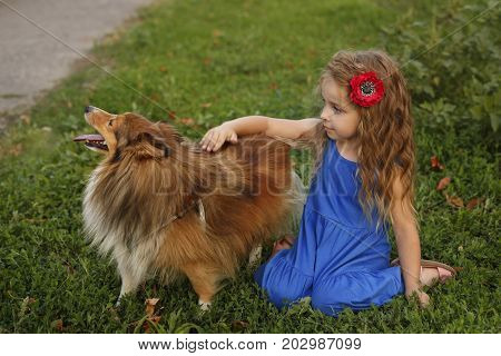 Cute little girl with a dog Sheltie breed. Best friends forever. Dog devotion. A girl and a pet in the park. She stroked the dog