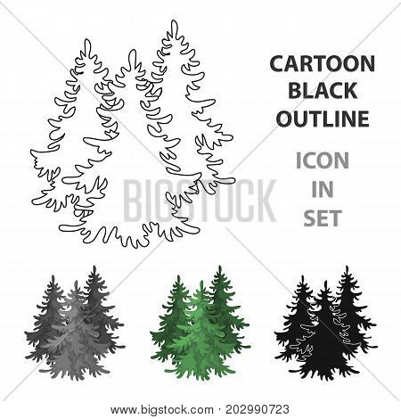Canadian spruce. Canada single icon in cartoon style vector symbol stock illustration .