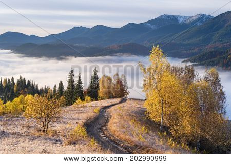 Picturesque mountain road. Autumn landscape with a morning mist. Beautiful forest in the hills. Birches with yellow leaves. Carpathians, Ukraine, Europe