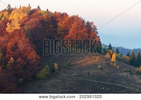 Autumn deciduous forest on a hill. Bright yellow orange and red trees