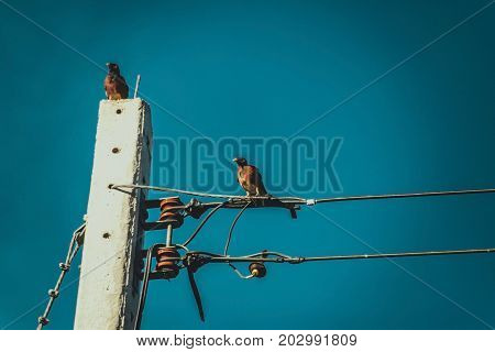 Bird perched on electric cable wires with blue sky background. vintage tone.