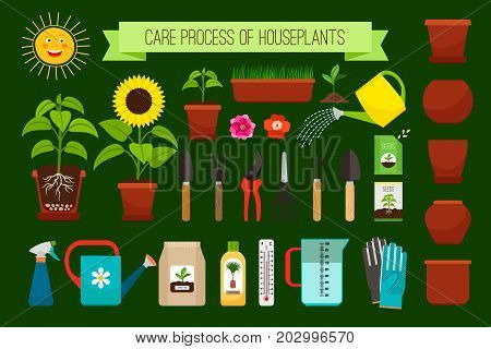 Houseplants care process icons and flowers in pots collection. Vector illustration