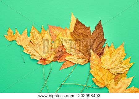 Fall Leaves Background. Autumn Fashion Design. Yellow Fall Leaves on Green. Trendy fashion Stylish Concept. Autumn Vintage