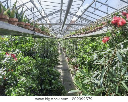 sunny illuminated scenery in a vegetal greenhouse