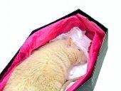 dead rat in coffin poster