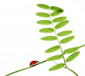 spring concept. flora and ladybird against white background. poster