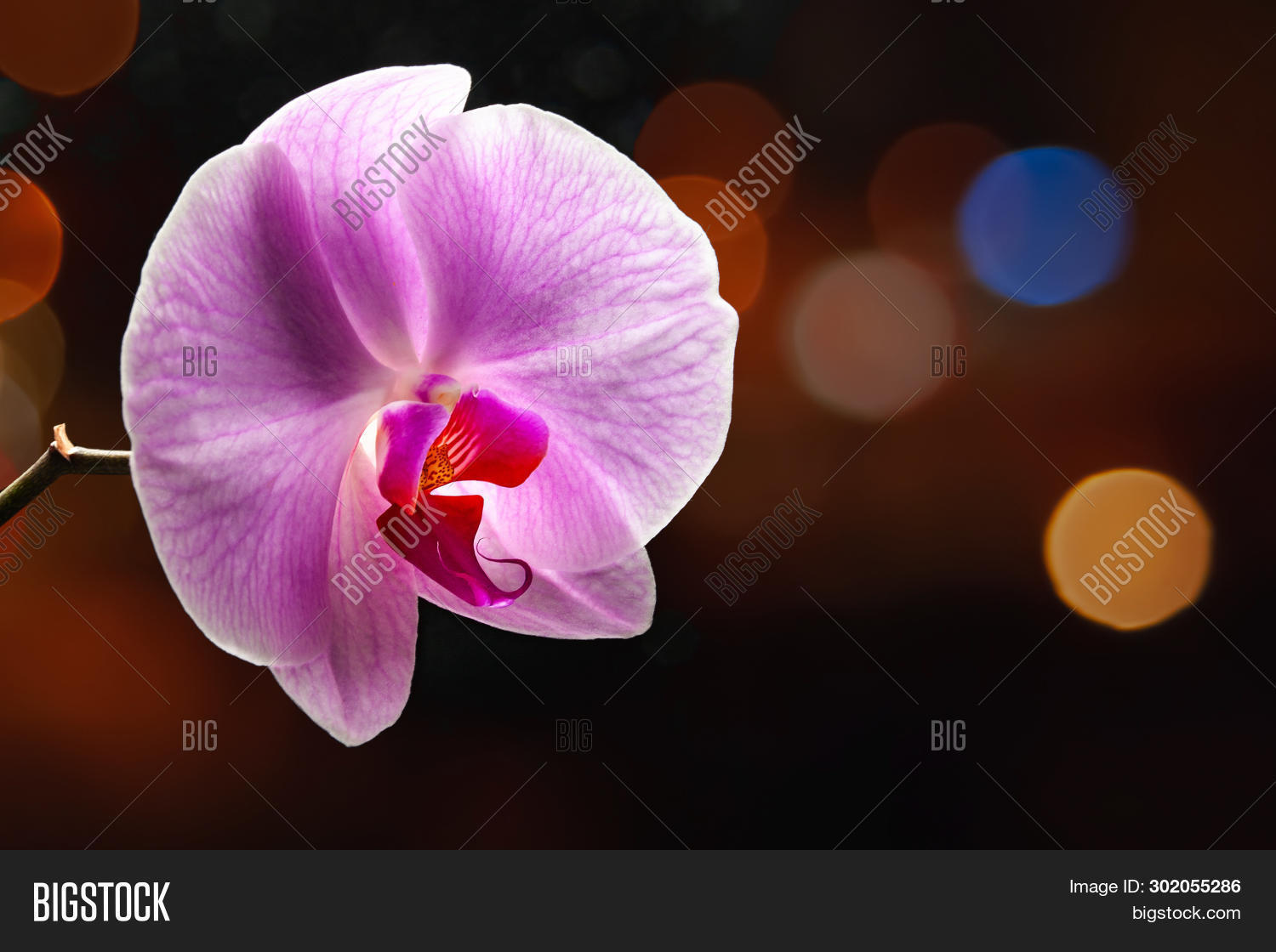 Purple Orchid Flower Image Photo Free Trial Bigstock