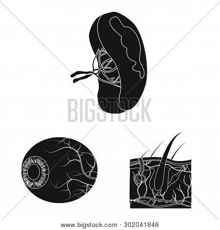 Vector Design Of Body And Human Logo. Collection Of Body And Medical Vector Icon For Stock.