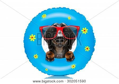 Sausage Dachshund  Dog Relaxing On Air Mattress, With Sunglasses  On Summer Vacation Holidays At The