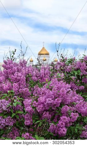 Moscow, Russia - May 13, 2019: Bushes Of Blooming Lilac And The Cathedral Of Christ The Saviour In T