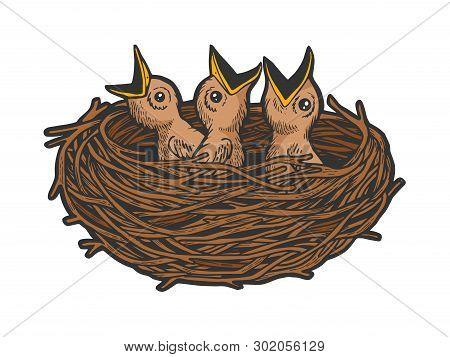 Nestling Bird In Nest Color Sketch Line Art Engraving Vector Illustration. Scratch Board Style Imita