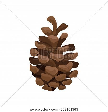 Brown Open Pine Cone On A White Background. Vector Illustration.
