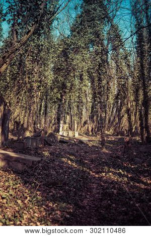 Path Through Old Jewish Cemetary In Czestochowa In Poland