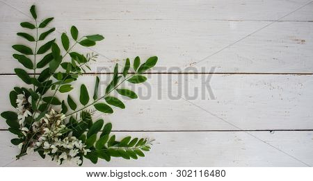 Spring Flower Landscape. Spring Blooming Spring Flowers On A White Background. White Flowers In Spri