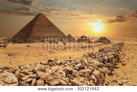 The Pyramid Of Menkaure  And The Three Pyramid Companions, The Camels In The Desert, Giza, Egypt