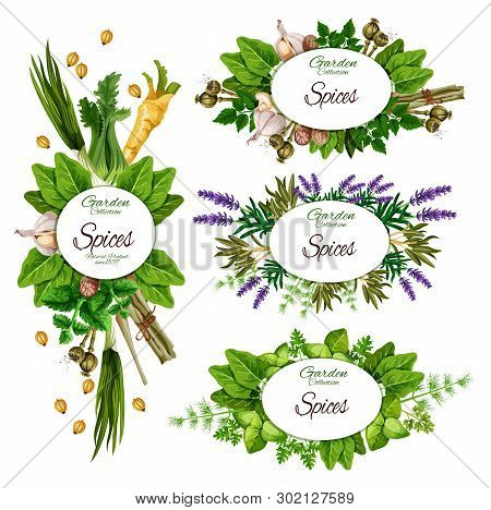 Farm Herbs And Garden Organic Spices, Seasonings Market Posters. Vector Garlic, Celery And Savory Co