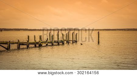 Assorted waterfowl roosting on pilings of a weathered pier on the Potomac River in Virginia.