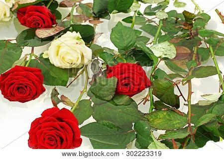 Beautiful Roses Close Up. Bouquet Of Red And White Roses