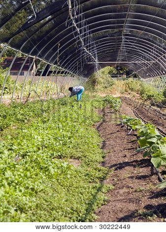 Farming - Tending Crops