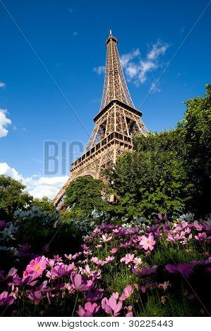 Eiffel Tower In Spring With Pink Flowers In Foreground