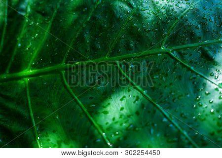 Rain Drops On Green Leaf Nature Background.