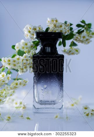 Perfume And White Flowers On Gray Background
