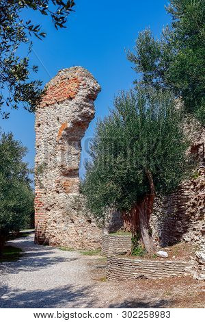 Beautiful View Of An Old Olive Tree Surrounded By An Ancient Roman Ruined Arch. Lake Garda, Italy