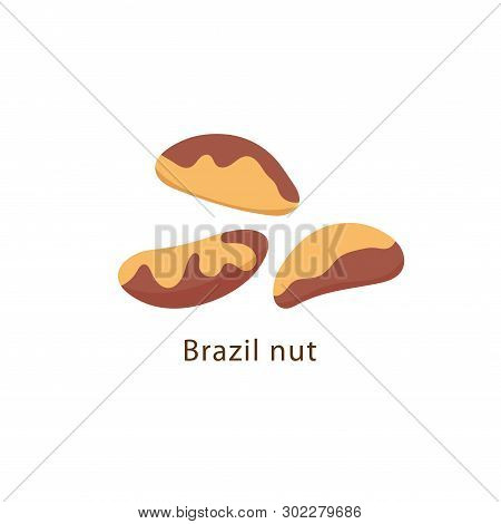 Brazil Nut Isolated On White Background Vector Illustration In Flat Design.