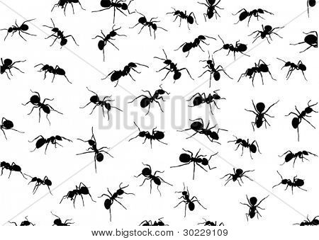illustration with ant silhouettes isolated on white background