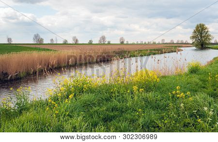 Meandering Creek In A Dutch Polder Landscape In The Spring Season. On One Bank There Is Dried Reed A