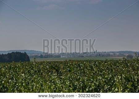 Big Grainfields In The Middle Of The German Countryside With Hills, Forests And Meadows