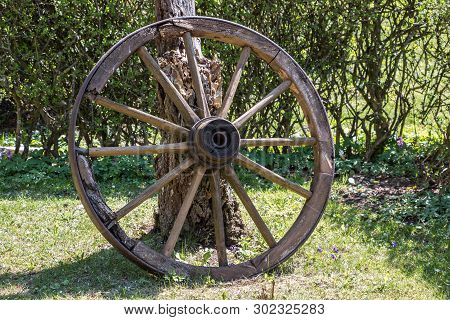 Wooden Wheel Of A Mail Coach In The Green Garden