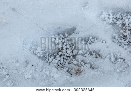 Foot Print Of Some Kind Of Predator On The White Snow