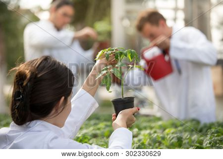 Woman Agronomist Holding Flower Pot With Seedling In Greenhouse With Agronomists Watering Sprouts In