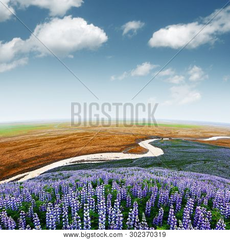 Picturesque landscape with river and lupine flowers field. Iceland, Europe