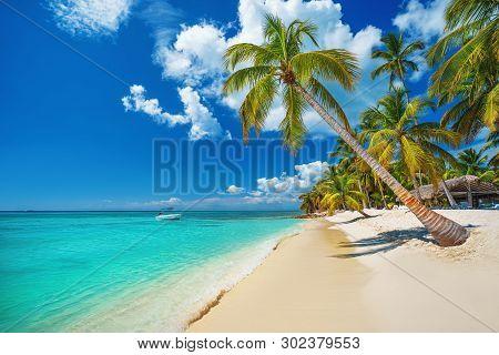 Island. Tropical Beach In Punta Cana, Dominican Republic