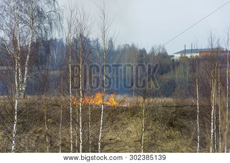 Illegal Burning Of Dry Last Year's Grass In Early Spring.