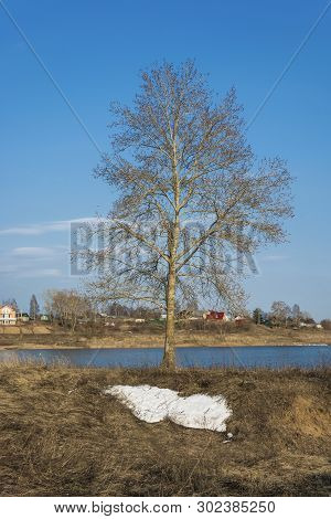 A Lonely Tree Without Leaves On The Bank Of A Small River Against The Blue Sky And The Remains Of Wh