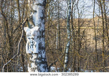 Shot White Female Mannequin Nailed To A Birch Trunk In The Sun.