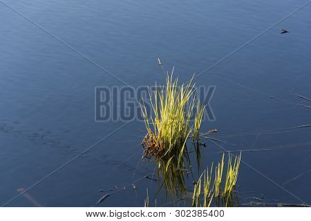Two Bunches Of Green Grass Against The Backdrop Of The Mirror Smooth Water.