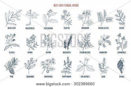 Best Anti-fungal Herbs Set. Hand Drawn Botanical Vector Illustration