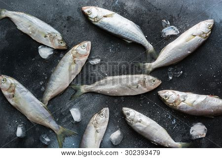 Black Sea Bluefish On Black. Fish Pattern With Space For Text. View From Above.