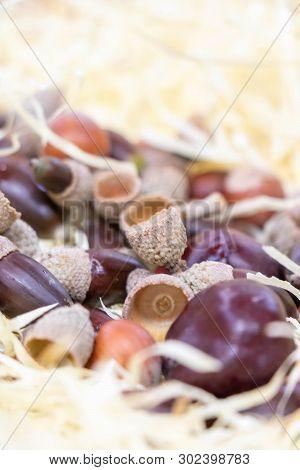Harvest In Autumn, Nuts, Acorn, Chestnut, Chestnut And Hazelnut
