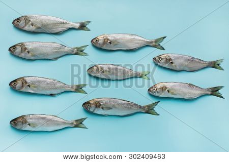 Black Sea Bluefish On Pastel Blue. Fish Pattern With Space For Text. View From Above.