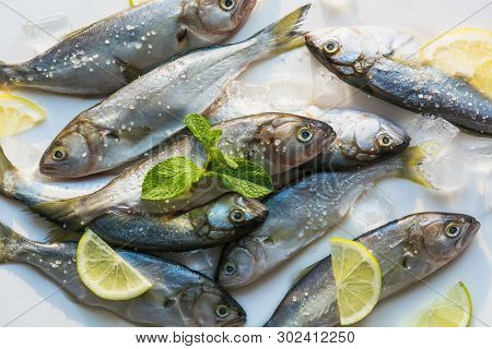 Black Sea Fresh Bluefish On White. Fish Pattern With Space For Text. View From Above.