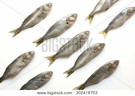 Black Sea Bluefish On White. Fish Pattern. View From Above.