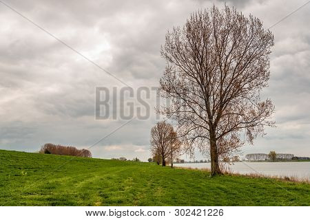 Tall Trees Just Budding On The Flood Plain Of The Dutch River Bergsche Maas Near The Village Of Duss