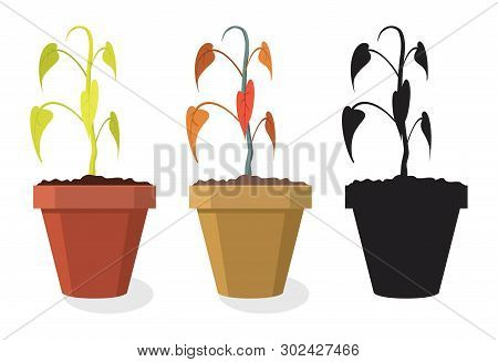 Vector Set Of Dying Home Plants Isolated On White Background. Dry Soil Makes Pot Plant To Wilt And B